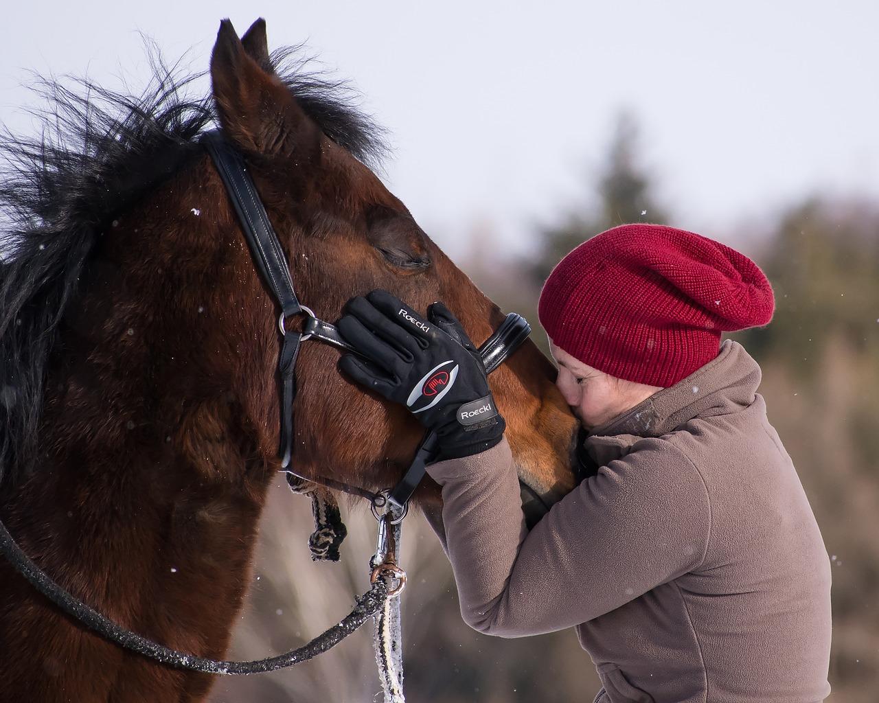 horse-2151231_1280