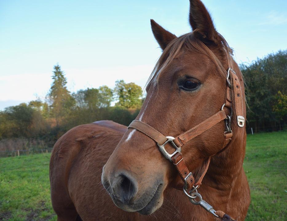 Classic Equine Equipment Blog Horses Hearing