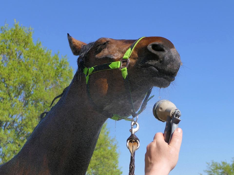 Classic Equine Equipment Horse Blog