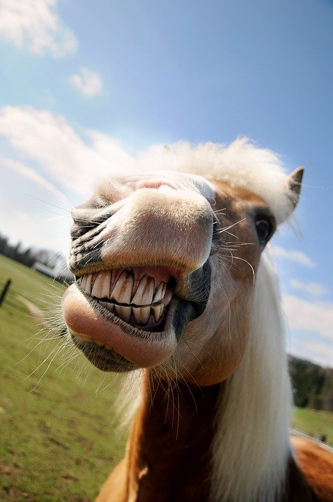 Classic Equine Equipment Blog - Your horses mouth
