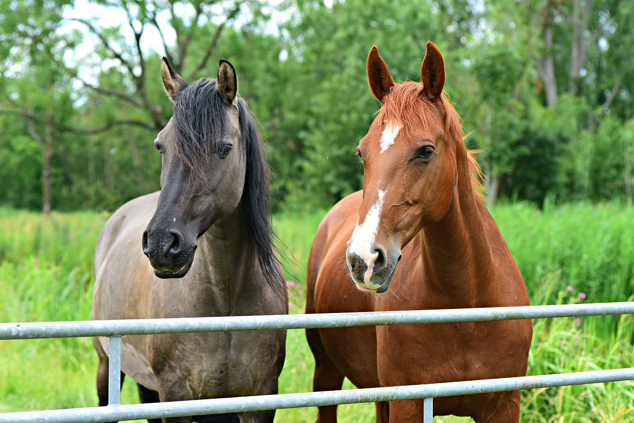 Stall boredom - horse blog