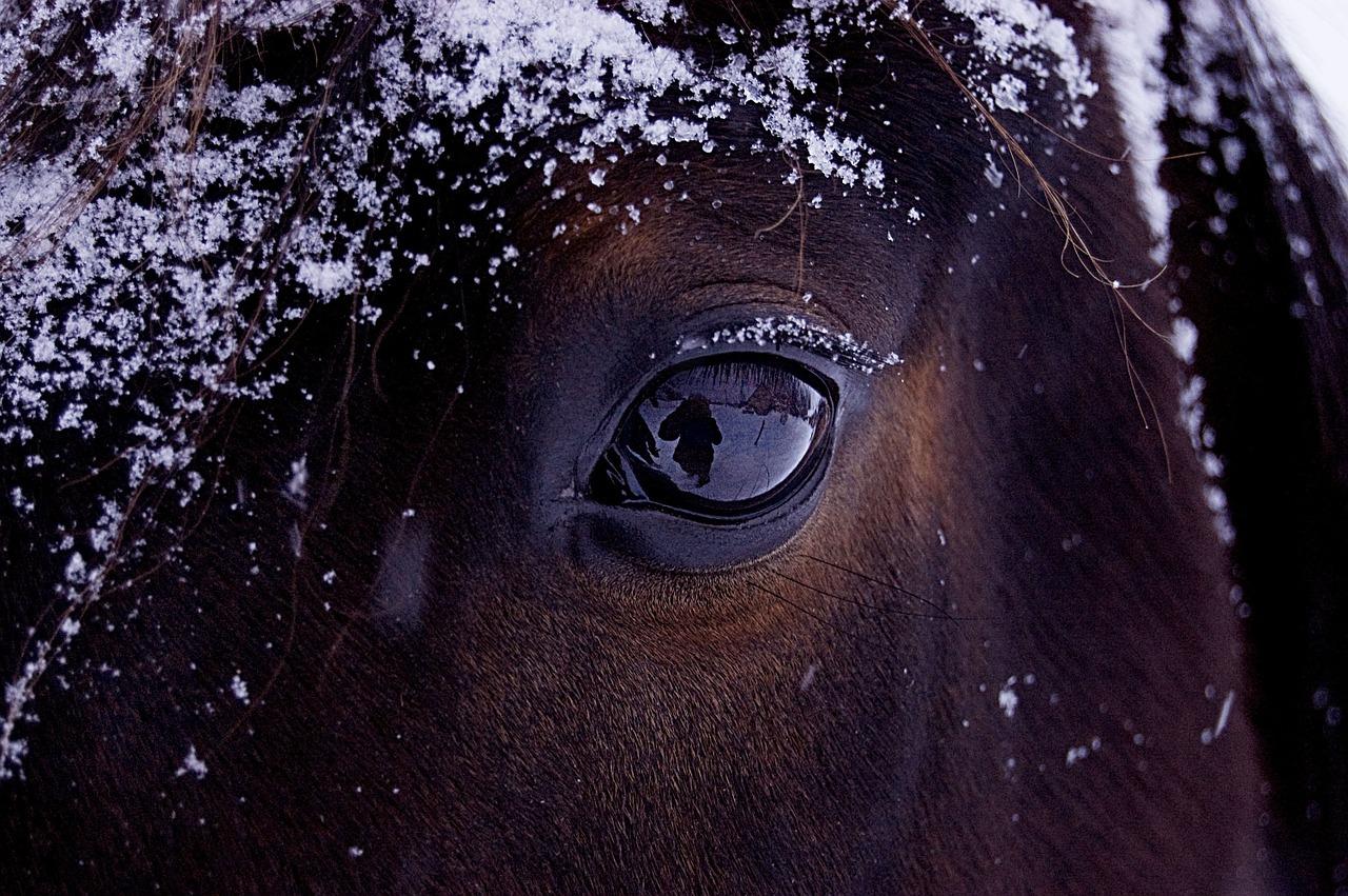horse-743474_1280