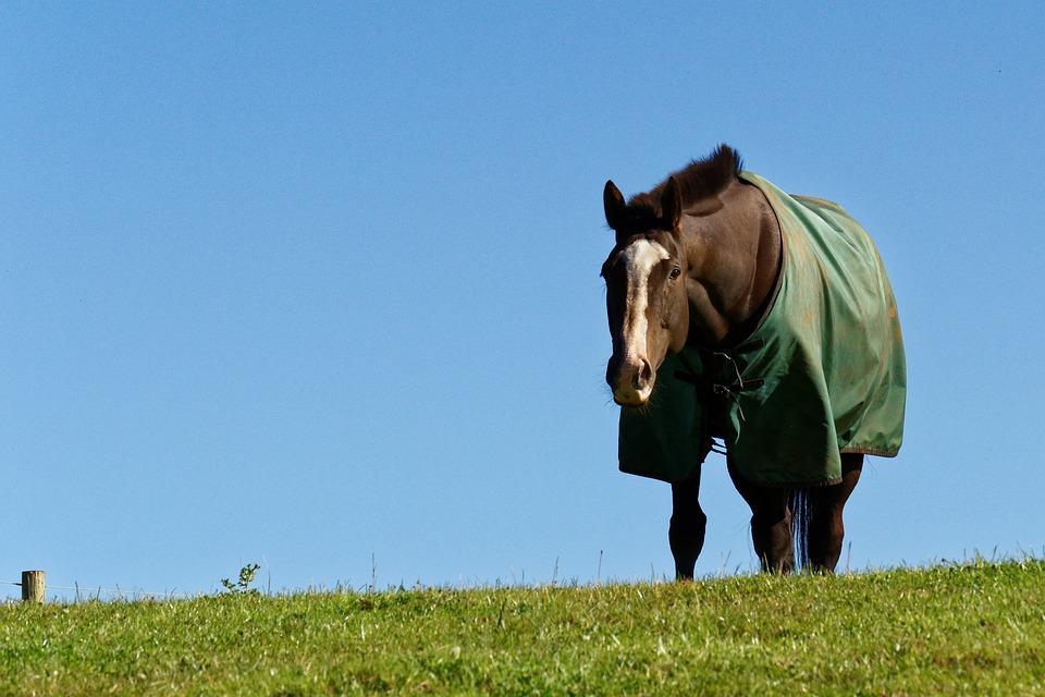 Horse Blanketing - Classic Equine Blog