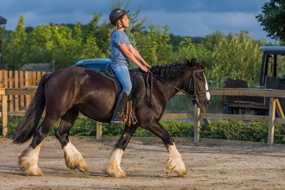 Classic Equine Equipment Blog - Introducing your child to horses
