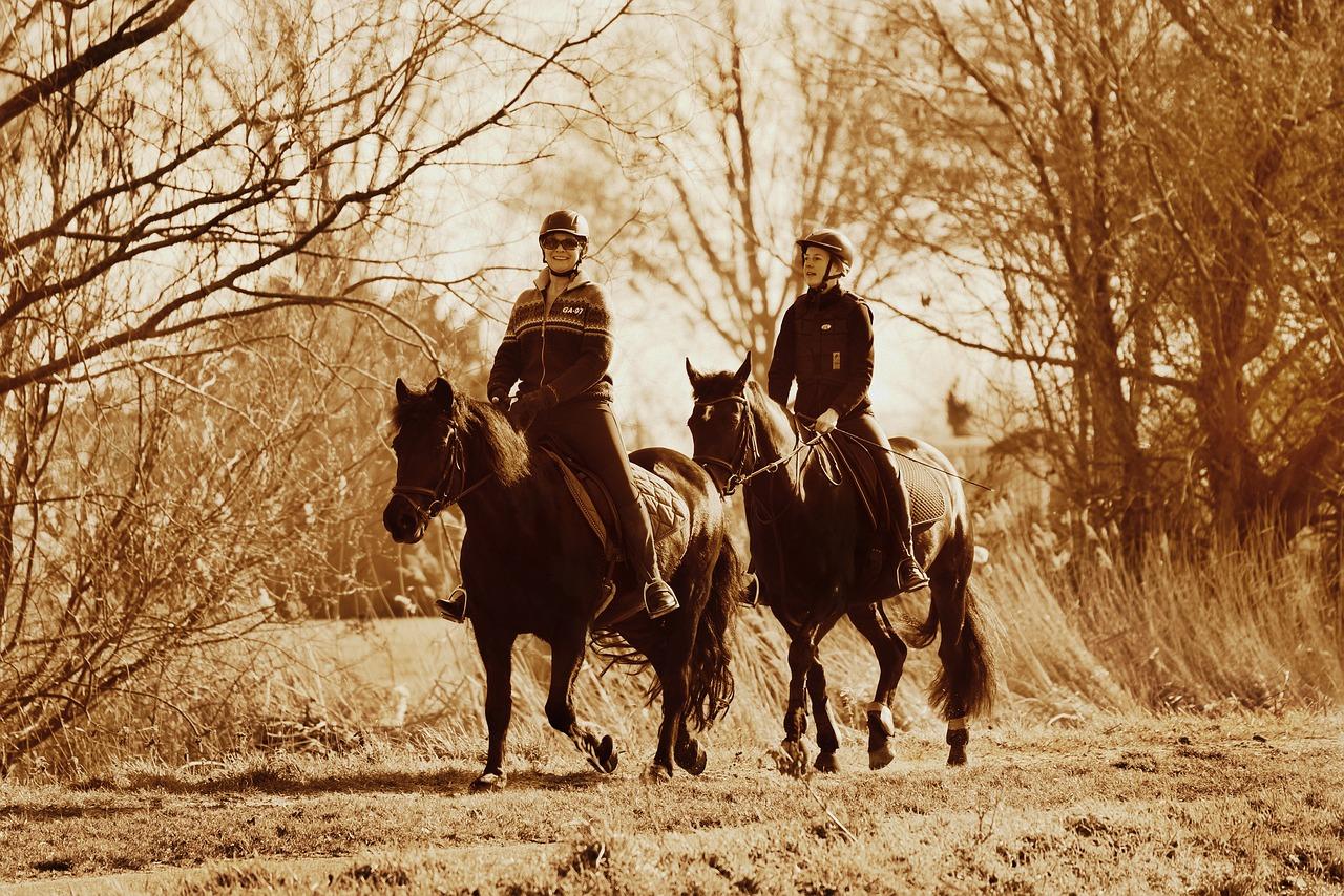 horse-riding-4030864_1280