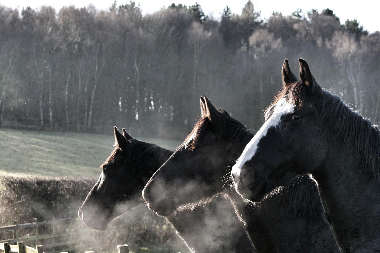 horses-2048588_1280