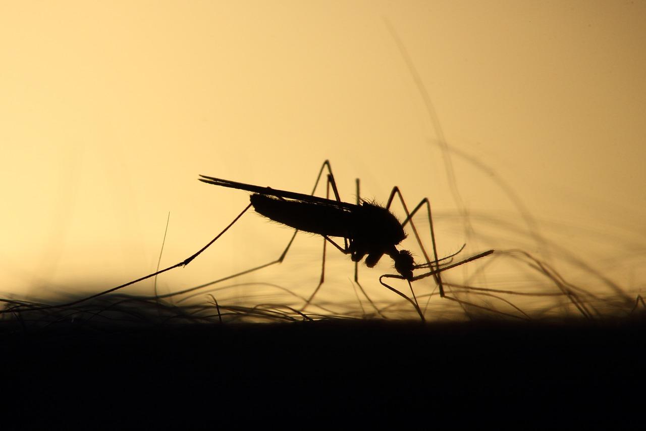 mosquito-3860900_1280