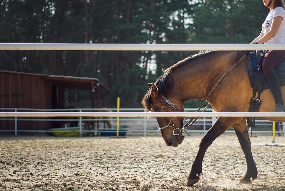 Classic Equine Equipment Blog - Mindfulness